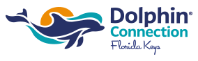 Dolphin Connection Logo